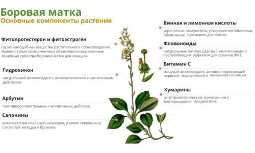 Лечебные свойства растения обусловлены содержащимися в ней растительными гормонами - фитоэстрогеном и фитопрогестероном, а ведь как раз их недостаток или переизбыток влияет на развитие патологических процессов в организме человека