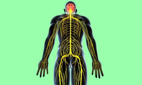 При многих врожденных или приобретенных патологиях нервной системы может развиваться такое дизурическое расстройство