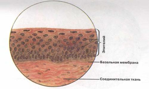 ОАМ - норма показателей клеток эпителия - не более 6 в поле зрения