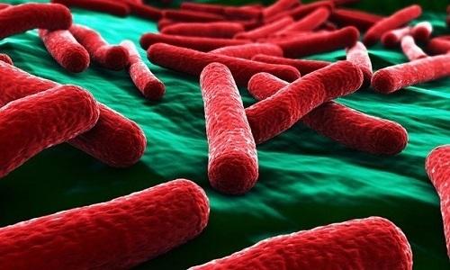 При внедрении кишечных или синегнойных палочек организм с высоким местным иммунитетом справляется с проблемой самостоятельно