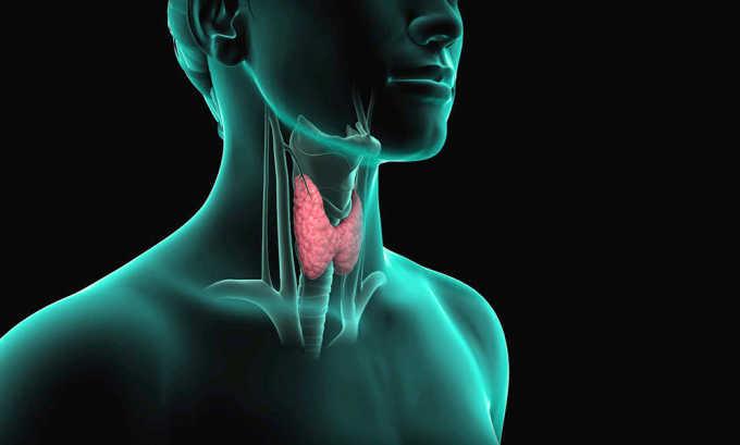 Пшено не рекомендуется употреблять при заболеваниях щитовидной железы