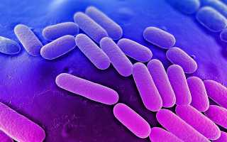 Какие бактерии могут вызвать цистит?