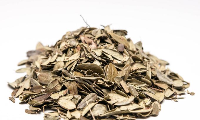 Сухие листья брусники используются как дополнение к медикаментам, так и самостоятельно, если воспалительный процесс не зашел еще слишком далеко