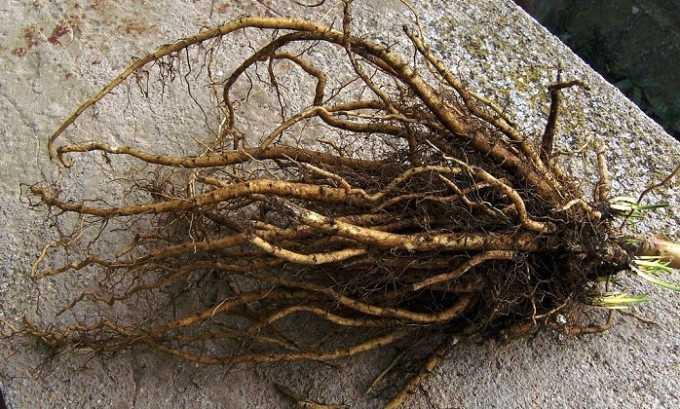 Для приготовления отвара, который поможет справиться с циститом, используются корни лекарственных растений