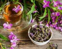 Поможет ли иван чай при цистите?