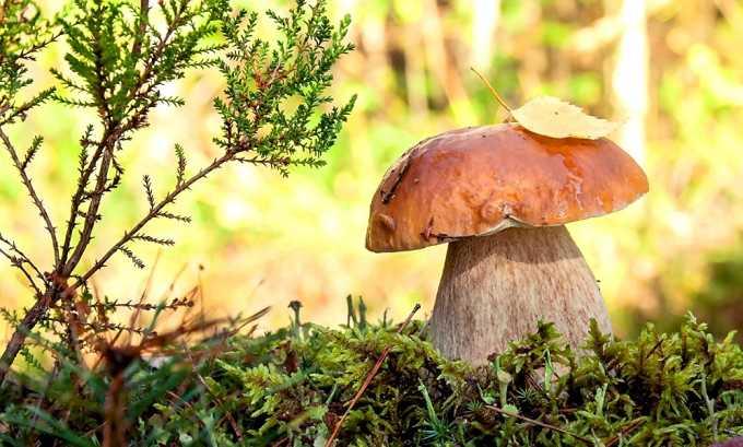 Нельзя употреблять грибы при остром цистите