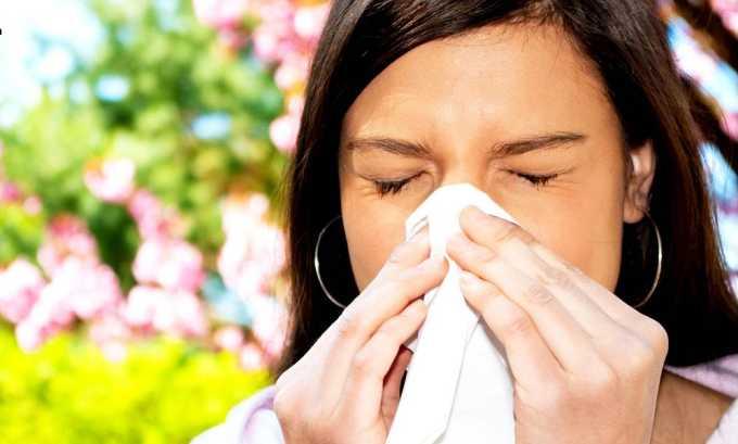 Почечный чай противопоказан людям страдающим аллергией на какую-либо траву, входящую в состав лекарственного сбора