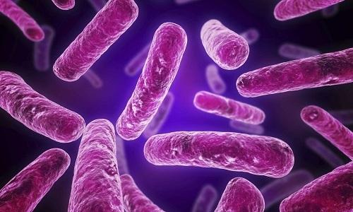 Когда бактерии достигают кишечника, развивается расстройство желудка, которое сопровождается диареей