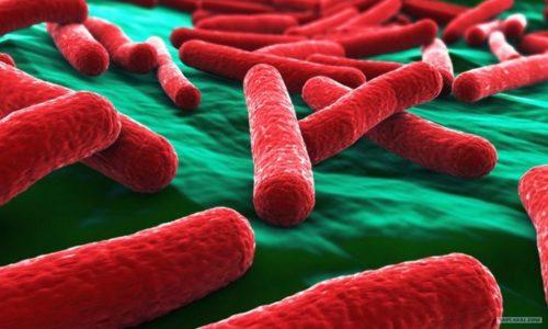Кишечная палочка условно-патогенный микроорганизм обитает в кишечнике человека и при нормальном состоянии иммунитета не вызывает воспаления