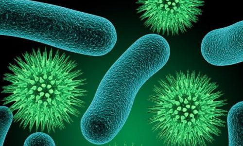Возбудителями пиелоцистита могут быть стафилококк, стрептококк или кишечная палочка