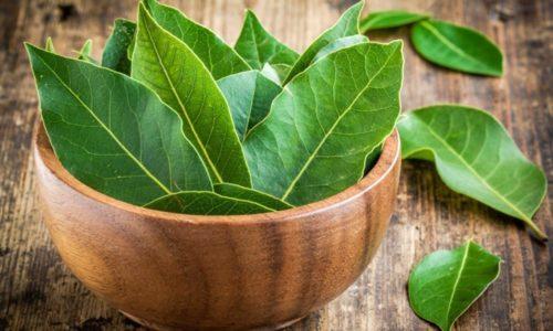 Лечение цистита лавровым листом пользовалось популярностью еще в давние времена, когда не существовало никаких лекарственных средств