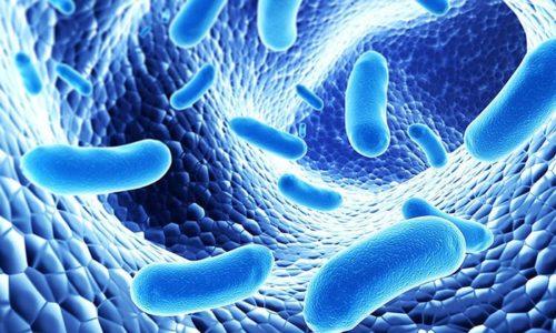 Воспалительный процесс в мочевом пузыре провоцируют патогенные микроорганизмы, обитающие на его слизистой оболочке