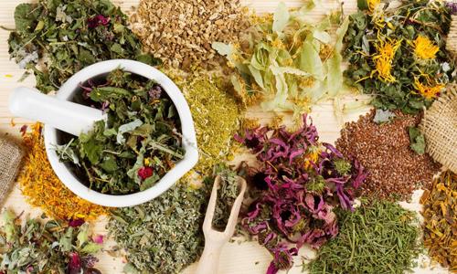 Мочегонный употребляют при лечении цистита травяные сборы применяются для вымывания инфекции из мочевыводящих путей