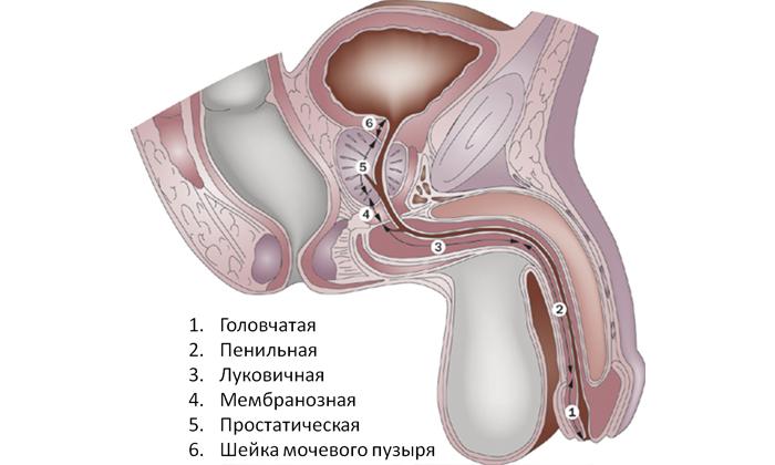 При сексе больно в районе мочевого пузыря