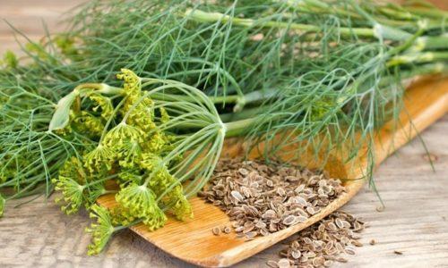Недорого обойдется лечение цистита при использовании семян и зелени укропа