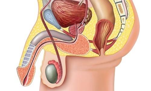 Распространенным последствием инфекции является уретрит (инфекционное воспаление мочеиспускательного канала), при котором боли отдают в мочевой пузырь