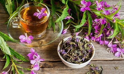 Иван-чай часто используют при воспалительных заболеваниях мочеполовой системы